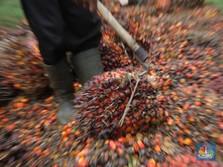 Sudah Melonjak Nyaris 10%, Harga CPO 'Rehat' Dulu