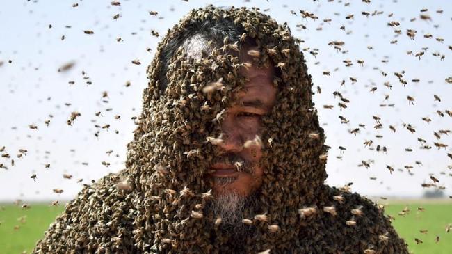 Seorang pria di Arab Saudi dengan tubuh yang tertutupi lebah berpose untuk sebuah foto. (REUTERS/Mohamed Al Hwaity)
