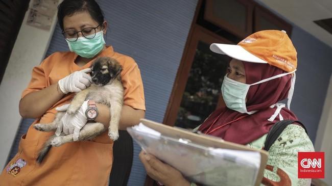 Petugas KPKP DKI Jakarta mendata anjing yang telah dipasangi microchip.(CNN Indonesia/ Hesti Rika)