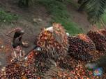 Corona Menggila di India, Minyak Sawit Kena Getahnya