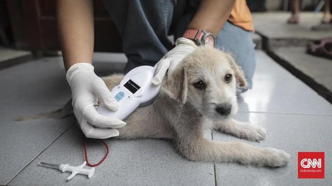 Petugas KPKP DKI Jakarta memindai anjing yang telah ditanami microchip di rumah warga yang berada di kawasan Jakarta Pusat,Rabu (13/9). (CNN Indonesia/ Hesti Rika)
