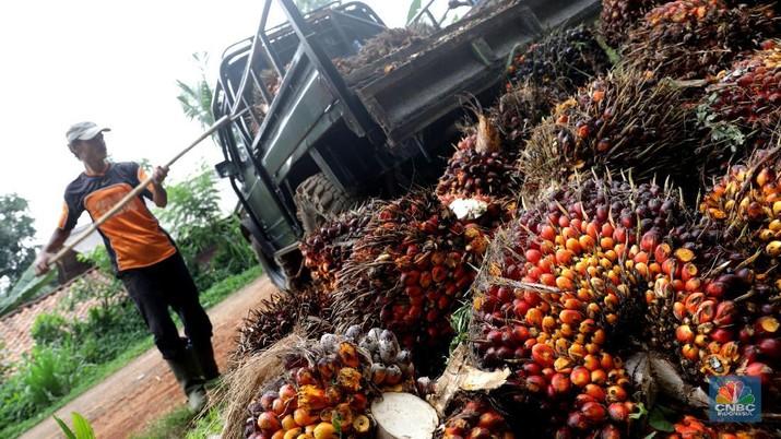 Ekspektasi lesunya ekspor minyak sawit Malaysia membuat pelaku pasar khawatir ketimpangan pasokan dan permintaan di pasar global.