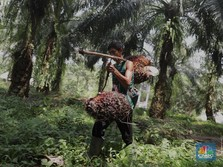Poseidon Tukar Utang Jadi Saham di Emiten Sawit Grup Bakrie
