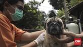 Pemasangan microchip ini dilakukan untuk mempermudah perekaman kesehatan hewan dan pelacakan hewan yang hilang.(CNN Indonesia/ Hesti Rika)