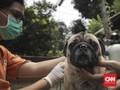 FOTO: Pemasangan Microchip pada Anjing untuk Deteksi Rabies