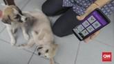 Pemilik menunjukan aplikasi SiRaja usai anjingnyadipasangi microchip. SiRaja merupakan aplikasi berbasis android dan situs yang berfungsi sebagai alat/media untukmenyelaraskan data pengendalian rabies di DKI Jakarta. (CNN Indonesia/ Hesti Rika)