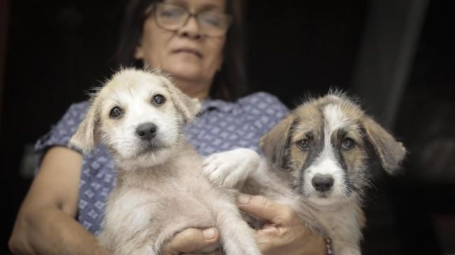 Setelah dibagi secara gratis, nantinyamicrochipini akan didistribusikan ke sejumlah klinik dokter hewan dengan biaya sekitar Rp200-Rp500ribu.(CNN Indonesia/ Hesti Rika)