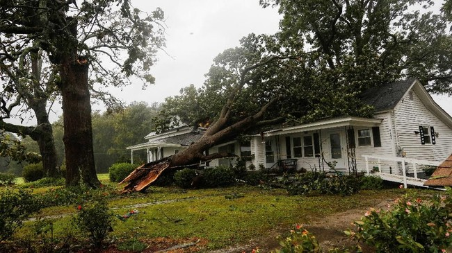 Pohon yang diterpa badai Florence 'bersandar' pada sebuah rumah di kota Wilson, Carolina Utara. (REUTERS/Eduardo Munoz)