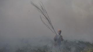 Angin Kencang, Kebakaran Hutan dan Lahan di Riau Meluas