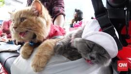 Dua Kucing Jadi Saksi Perjuangan Pengemudi Ojek <i>Online</i>