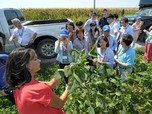 Perang Dagang, Trump Akan Kucurkan Rp 216,8 T untuk Petani AS