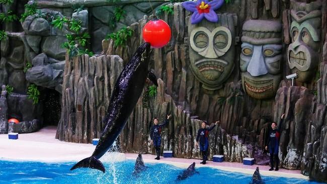Sejak tahun 2014, sekitar 872 ikan paus dan lumba-lumba ditangkap dan ditawan di China.