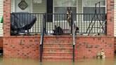 Tak berdaya, mereka hanya dapat menanti relawan yang terjun ke tengah banjir untuk menyelamatkan para hewan. (Reuters/Jason Miczek)