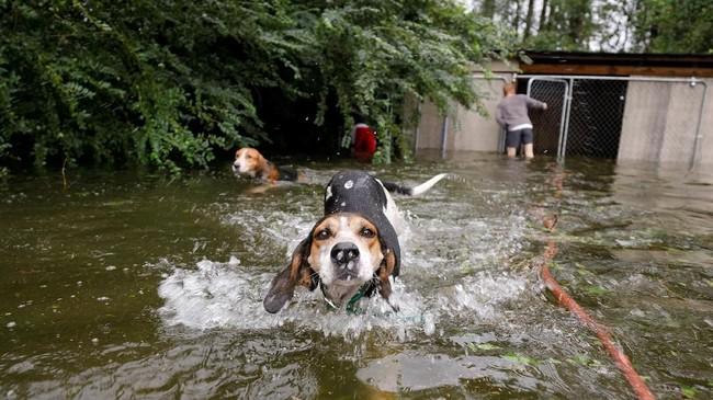 Di tengah genangan air gelap dan rambu jalan yang tak jelas, mereka menerka ketinggian banjir agar dapat memperkirakan di daerah mana kira-kira hewan peliharaan bersembunyi. (Reuters/Jonathan Drake)
