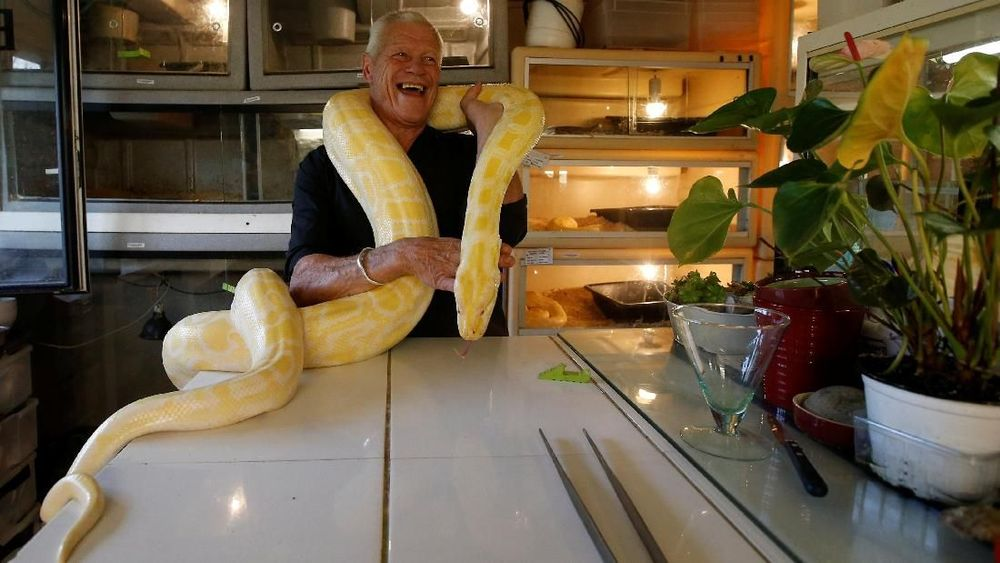 Di sebuah rumah sederhana di Sungai Loire Prancis, seekor ular tinggal di atas meja kopi, seekor kura-kura seberat 50 kg (110 pon) menjelajah kebun dan seekor alligator dua meter (tujuh kaki) tidur di tempat tidur pemilik sementara yang lain terus mengawasi di pintu. Reuters/Stephane Mahe