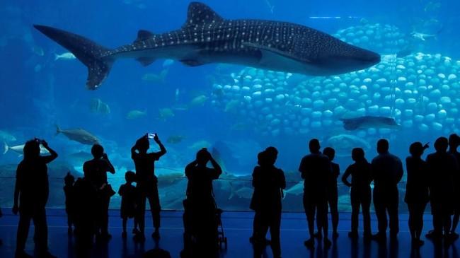 Namun tidak sedikit pengunjung yang berpendapat hewan-hewan itu tidak tersiksa, karena mereka melihat rombongan ikan besar itu mendapat perlakuan yang ramah dan makan yang cukup.