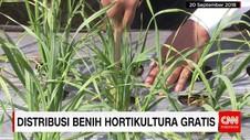 Distribusi Benih Hortikultura Gratis