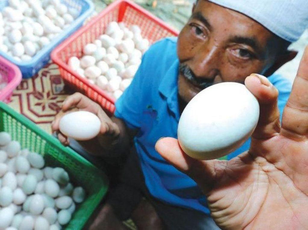 Wow! Pria Ini Raup Rp 43 Juta per Bulan dari Jualan Telur Bebek