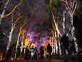 Kalender Wisata Australia Barat Tahun Ini