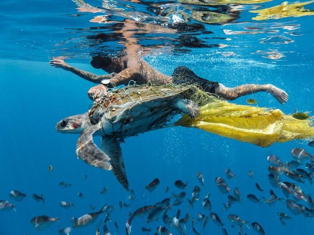Save Turtle by Jing Li menampakkan seekor kura-kura coba dibebaskan dari sampah plastik. Foto: Environmental Photographer Of The Year