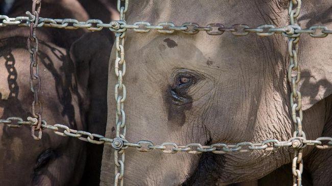 Tangis Gajah Jadi 'Cambuk' Konservasi bagi Dokter Wandha