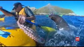 VIDEO: Pria Selandia Baru Ditampar Anjing Laut Pakai Gurita