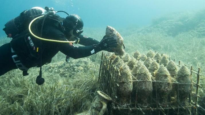 Ini Mysterium, Anggur yang Tersimpan 10 Tahun di Bawah Laut