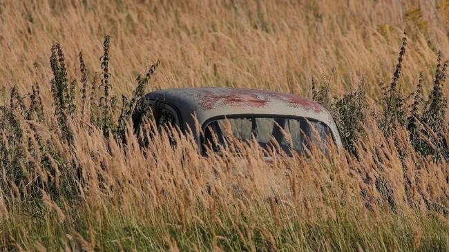 Ilalang dibiarkan tumbuh di sekitar mobil. Museum otomotif terbuka ini berada di sekitar 260 km dari Moskow. (REUTERS/Maxim Shemetov)