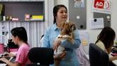 Salah satu pekerja terlihat menggendong anjing peliharaannya di tengah ruangan kantor diBangkok.