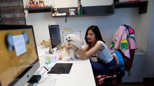 FOTO: Anjing Masuk Kantor