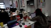 Hubungan yang terjalin antara manusia dan hewan peliharaan di tempat kerja diharapkan bisa membuat mengurangi tingkat stresdan berimbas pada produktivitas.