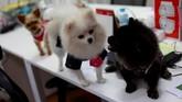 Pemandangan anjing berada di atas meja kerja adalah hal yang lumrah di beberapa kantor di Bangkok.
