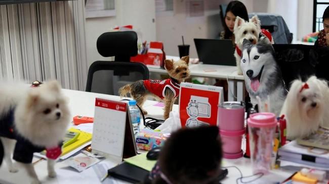 Membawa anjing ke tempat kerja nampaknya sedang menjadi tren di Thailand. Khususnya bagi perusahaan periklanan yang jam kerjanya terbilang