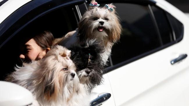 Bagi mereka yang tidak membawa anjing ke tempat kerja, bermain dengan hewan peliharaan milik rekan kerja lain jugadiperbolehkan.