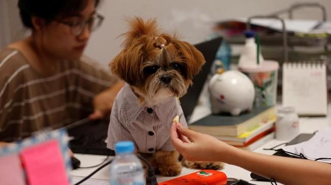 Beberapa riset menyebutkan membawa hewan kesayangan ke tempat kerja memang mampumeredakan stres.