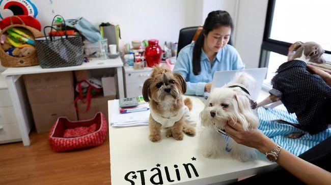 Bawa Hewan Peliharaan ke Kantor jadi Tren di Thailand