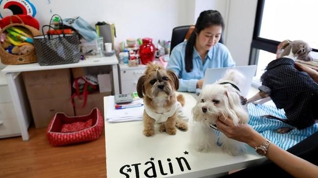 Aturan baru terkait membawa hewan peliharaan ke kantor dibuat agar para pegawai bisa melepaskan stres saatbekerja.