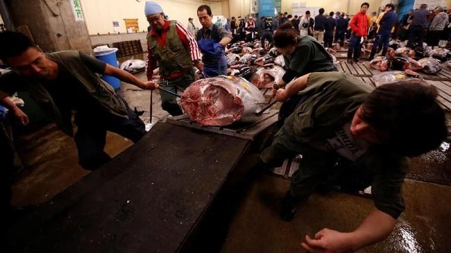 Di tempat ini, wisatawan bisa melihat 'ritual' pelelangan ikan, khsususnya ikan tuna yang bobotnya bisa mencapai 200 kilogram.