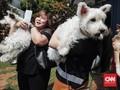 Cara Menyelamatkan dan Merawat Hewan yang Terjebak Banjir