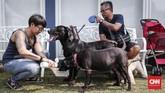 Penyayang anjing menunggu giliran pemasangan microchip untuk anjing dan kepemilikan hewan yang bertanggung jawab. pemasangan microchip bertujuan mendata dan memberikan identitas hewan serta memudahkan pengecekan status kesehatan hewan.(CNNIndonesia/Safir Makki)