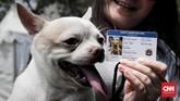 Data anjing akan masuk dalam pangkalan data Dinas KPKP DKI Jakarta. Tidak sampai 5 menit pemilik sudah mendapatkan kartu identitas dan kartu keterangan kesehatan, tergantung ketenangan hewan. Kemudian hewan diperbolehkan bisa pulang.(CNNIndonesia/Safir Makki)