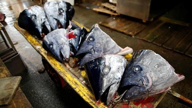 Sabtu itu, tuna sirip biru yang lezat dan berdaging tebal--sebagai salah satu spesies terancam--terjual dengan harga 4,4 juta yen atau setara dengan Rp591 juta. (REUTERS/Issei Kato)
