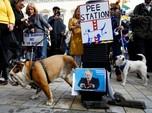 Saat Ratusan Anjing Demo, Tuntut 'Wooferendum'