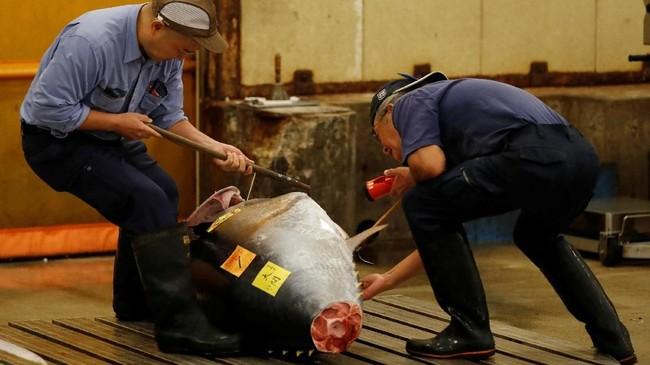 Sabtu itu, tuna sirip biru yang lezat dan berdaging tebal--sebagai salah satu spesies terancam--terjual dengan harga 4,4 juta yen atau setara dengan Rp591 juta. (REUTERS/Kim Kyung-Hoon)
