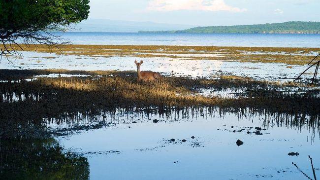 Memanfaatkan Kawasan TN Bali Barat untuk Ekowisata