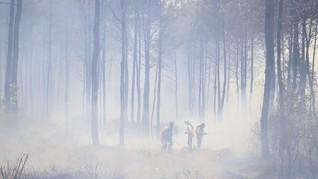 Kebakaran Hutan di China Renggut Nyawa 19 Orang