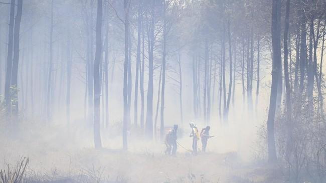 Kebakaran juga disebut menghanguskan hutan Kawasan Kebun Raya Kuningan (KRK) seluas 19 hektare dan juga satu unit Pondok di Bukit Seribu Bintang. ANTARA FOTO/Dedhez Anggara