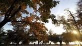 Pemandangan taman di Minsk, Belarusia, saat senja di musim gugur. (REUTERS/Vasily Fedosenko)