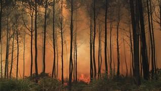 FOTO: Kebakaran di Gunung Ciremai Belum Padam