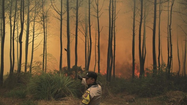Kebakaran di kawasan Taman Nasional Gunung Ciremai, Kuningan, Jawa Barat, sudah memasuki hari ke-12, namun belum bisa dipadamkan. ANTARA FOTO/Dedhez Anggara